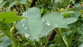 Nature, природ. утренняя роса Stock Photo