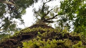 Nature' 最美好的s 免版税库存图片