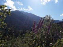 Nature& x27;在山一边的s美丽的花 库存照片