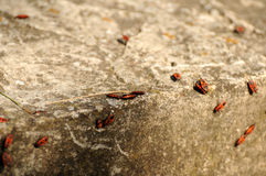 Nature 081. Little beetles at a concrete wall Stock Photos