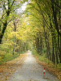 Nature 087. A view in an alley at autumn royalty free stock photography