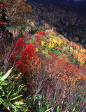 Nature-103. Japanese autumn scenery in mountain park-17 Royalty Free Stock Image