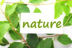 Nature Royalty Free Stock Photos
