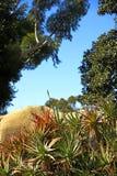Nature. Photo of cactus landscape in California Stock Image