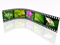 Nature. 3d film roll with color pictures (nature Royalty Free Stock Photos