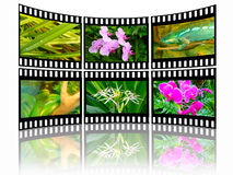 Nature. Film frames with color pictures (nature Royalty Free Stock Images