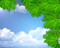 Nature. Abstract nature, green leafs and blue sky Royalty Free Stock Photo