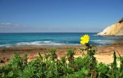 Nature. Picture taken on north border betwean Israel and Lebanon Stock Photos