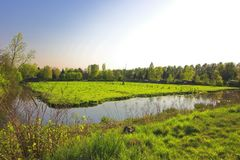 Nature. Green field of nature in Rotterdam / Holland Stock Image