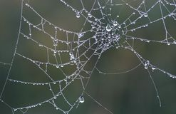 Nature. Spider web in the morning Royalty Free Stock Photo