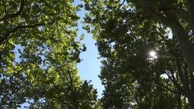nature clips vidéos