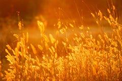 nature Photo stock