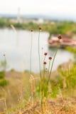 nature Photos stock