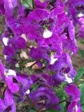 nature Photo libre de droits
