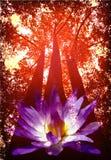 Nature Royalty Free Stock Photos
