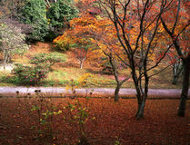 Nature -89. Japanese autumn scenery in mountain park-12 Stock Photography