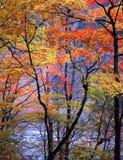 Nature -92. Japanese autumn scenery in mountain park-15 Stock Photo
