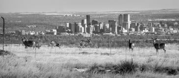 Nature above Denver Skyline Royalty Free Stock Photography