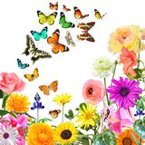 Nature abstract background. Colorful beautiful flowers and butterflies .Nature abstract background. Isolated on white stock illustration