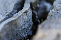 Nature Abstract: Deep Fissure in Aged Weathered Wood Royalty Free Stock Photos