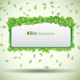 Nature abstract eco banner Stock Photography