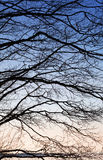 Nature abstract fragment with tree branches Royalty Free Stock Image