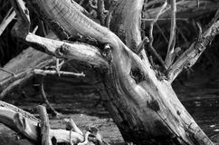 Nature Abstract  - Gnarled and Weatherworn Driftwood Stock Photography
