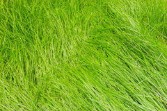 Nature abstract with green grass background stock photos