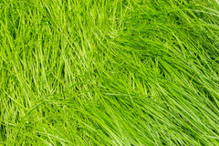 Nature abstract with green grass background stock photography
