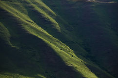 Nature Abstract: The Green Slopes of Hells Canyon in Spring Royalty Free Stock Photo