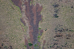 Nature Abstract: Scars of Landslides on the Slopes of Hells Canyon Stock Image