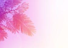 Nature abstraite colorée des feuilles en gros plan Image libre de droits