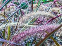 Nature abstraite, fond en verre de fleurs Photos libres de droits