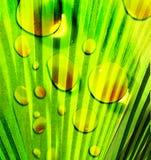 Nature abstraite verte Photos libres de droits