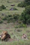 Nature africaine Image libre de droits