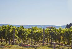 Nature and agriculture, vineyard. Slovenia, panoramic view of vineyard in summer and sea Stock Photo