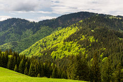 Nature along the cycling way from Malino Brdo to Revuce in Slova. View of nature Landscape along the cycling way from Malino Brdo to Revuce, Slovakia 2015 Royalty Free Stock Images