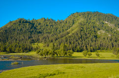 Nature of Altai. Green forest on the hills Stock Photo