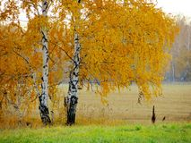Nature Altaya. Pleases eye of the artist in any season of the year Stock Images