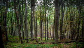 Nature, always amazing. One of the many peacful forest in Hungary Stock Photos