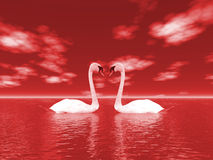Free Nature And Swans Royalty Free Stock Photography - 1906807
