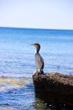 Nature animale de plage d'été de Rhodos Grèce de mer d'oiseau Image stock