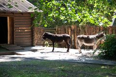 Two donkeys turned away from each other stock image
