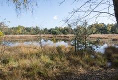 Nature area gilderhauser venn Royalty Free Stock Photos