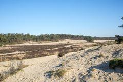 Nature area loonse en drunense duinen in holland Royalty Free Stock Images