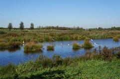 Groenzoom nature area, the Netherlands. Nature area in the Netherlands called the Groenzoom, near Pijnacker, Berkel, Zoetermeer, Nootdorp and Delfgauw in the stock photography