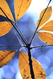 Nature art. Pale leaves getting brighter in sunlight Stock Photography