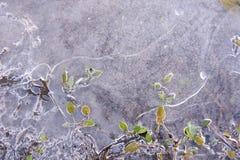 Nature art. Stock Image