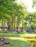Thailand, Pattaya, Khao Kheo zoo, nature, Asia, monkey, tree, water, greenery. Nature, Asia, monkeys, very lively, curious, interesting to watch them, sing Royalty Free Stock Photography
