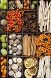 Nature Assortment Stock Images